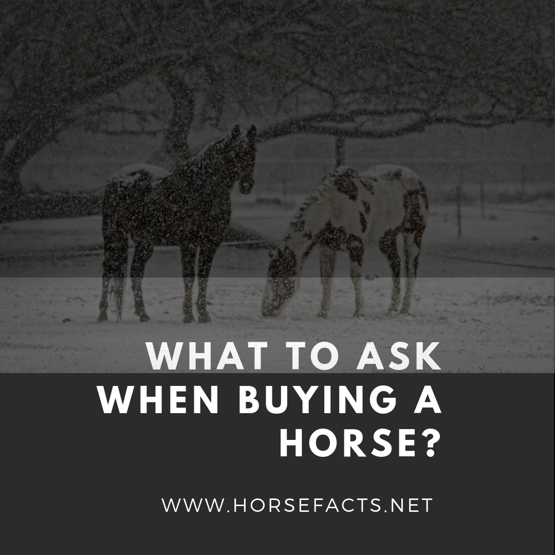 What to ask when buying a horse?