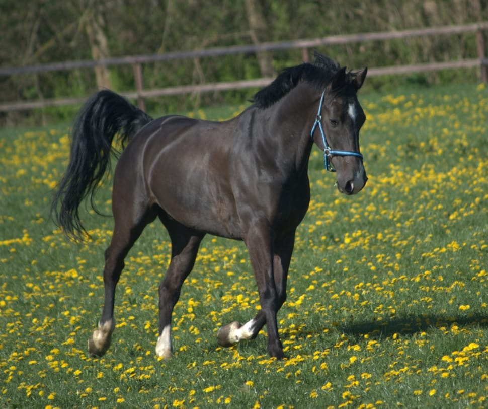 thoroughbred horses for sale