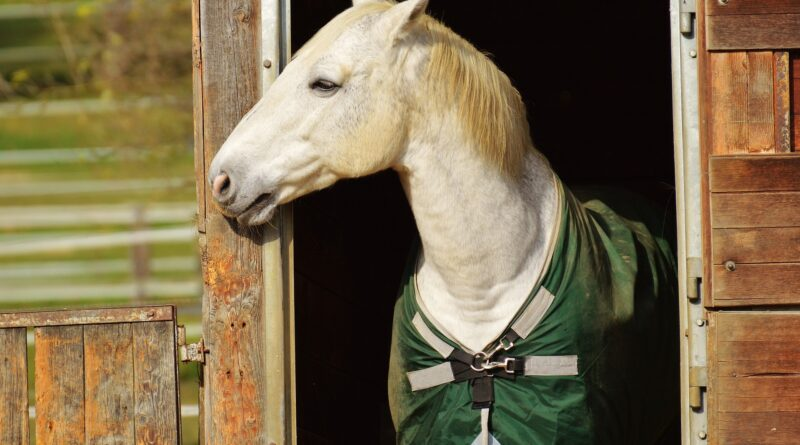 Horse boarding prices near me