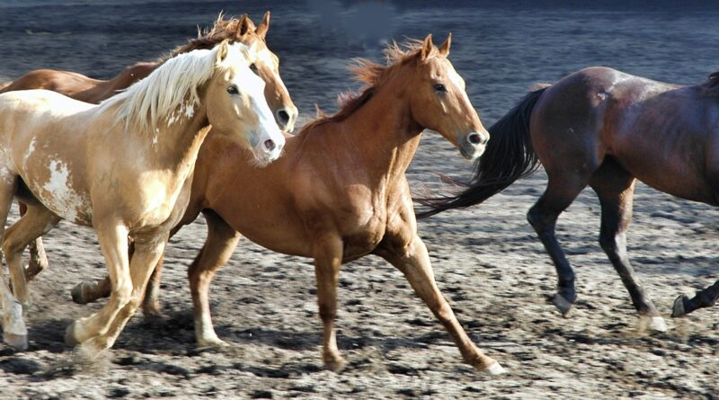 Top ten fastest horse breeds