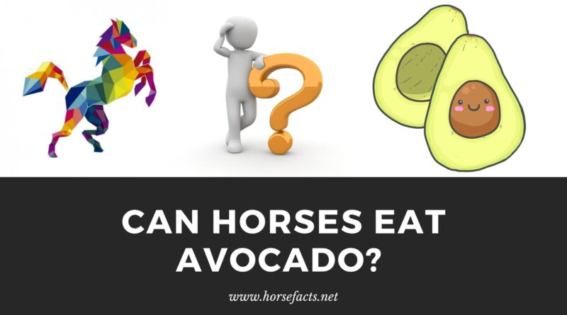 can horses eat avocado