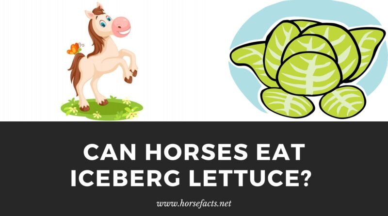 Can horses eat iceberg lettuce