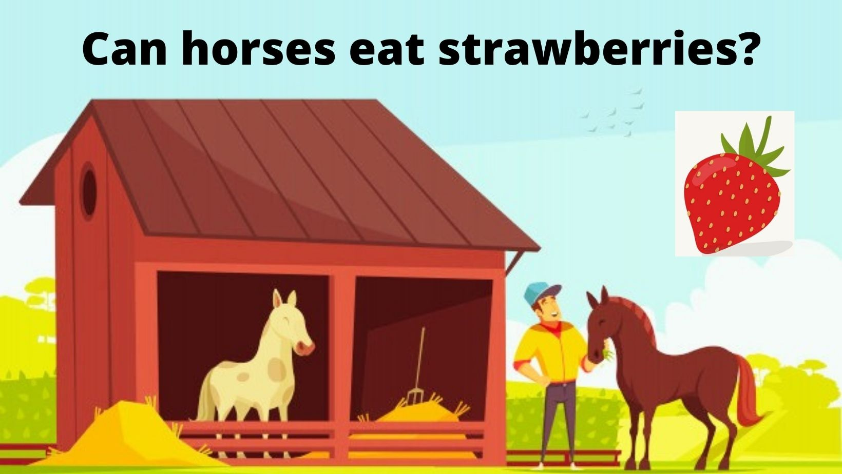 Can horses eat strawberries